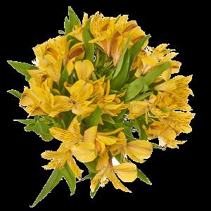 growers2home-category-alstroemerias